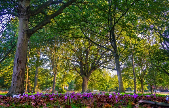 Picture trees, flowers, Park, England, London, London, England