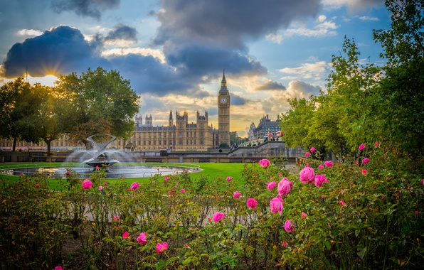 Picture flowers, Park, England, London, roses, Big Ben, fountain, the bushes, The Palace of Westminster, London, …