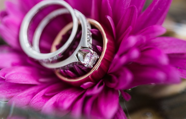 Picture flower, ring, petals, wedding, engagement
