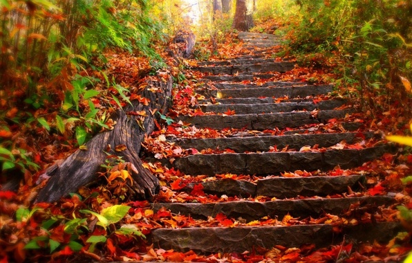 Picture autumn, forest, leaves, trees, Park, foliage, ladder, stage, steps