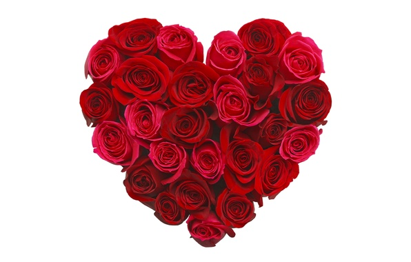 Picture flowers, heart, roses, love, buds, heart, romantic, roses
