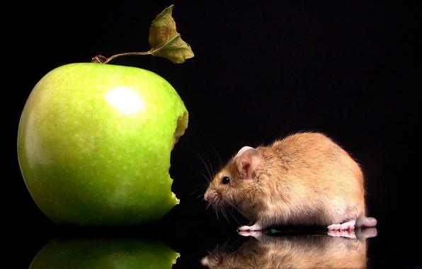 Picture Apple, Mouse, Bite
