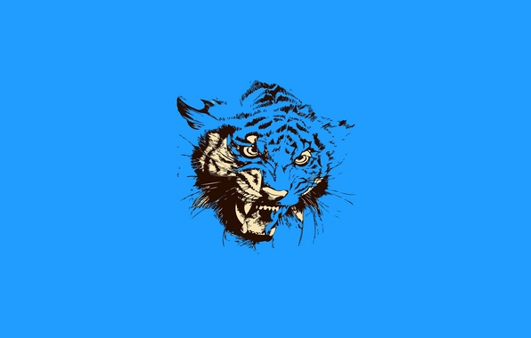 Picture cat, tiger, animal, mouth, grin