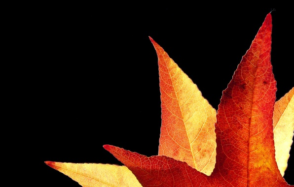 Picture autumn, sheet, background, Golden