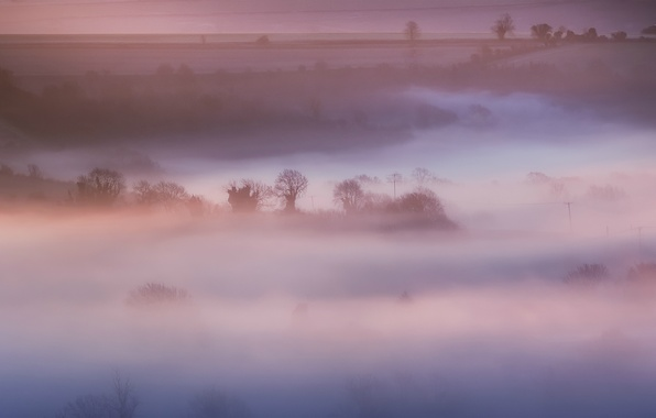 Picture field, trees, nature, fog, pink, England, morning, UK, haze