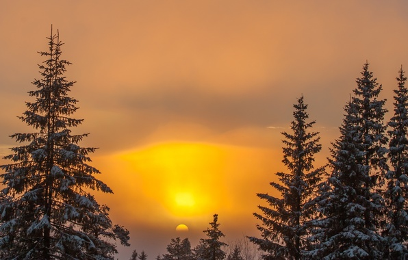 Picture winter, the sky, the sun, snow, trees, sunset, nature, background, tree, Wallpaper, wallpaper, widescreen, background, …