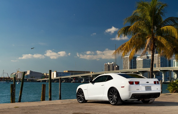 Picture white, the sky, bridge, the city, Palma, coast, Seagull, Chevrolet, Camaro, white, Chevrolet, muscle car, …
