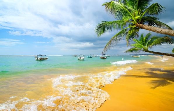 Picture sand, sea, beach, palm trees, shore, summer, beach, sea, sand, shore, paradise, palms, tropical