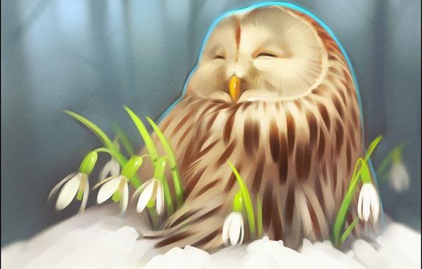 Picture winter, snow, flowers, owl, art, snowdrop, owlet