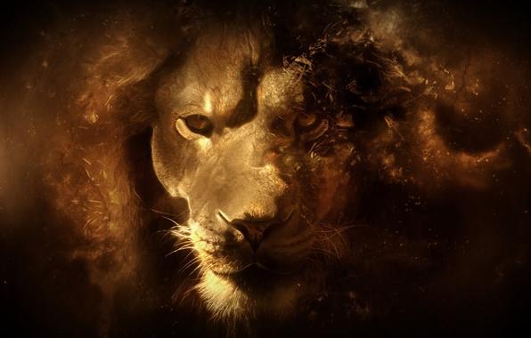 Picture look, face, predator, Leo