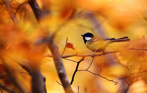 Picture autumn, leaves, branch, bird, bokeh