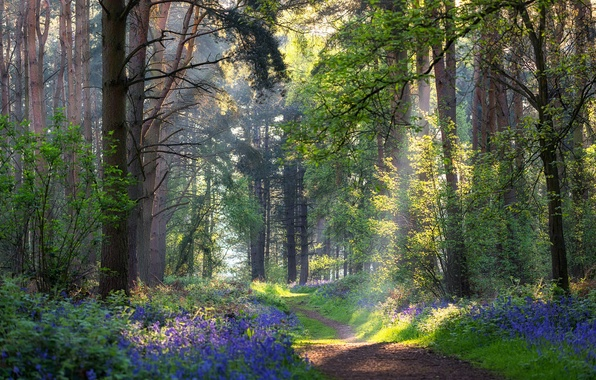 Picture forest, summer, flowers, path