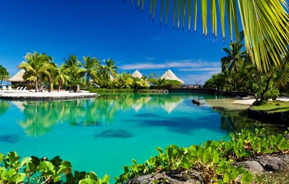 Picture sea, beach, tropics, palm trees, summer, sunshine, beach, Laguna, sea, ocean, paradise, vacation, palms, tropical