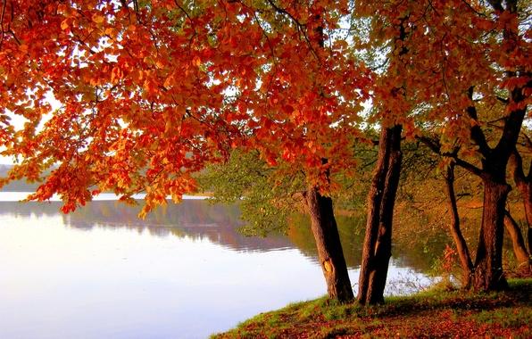 Picture autumn, leaves, trees, lake, pond, Park, the crimson