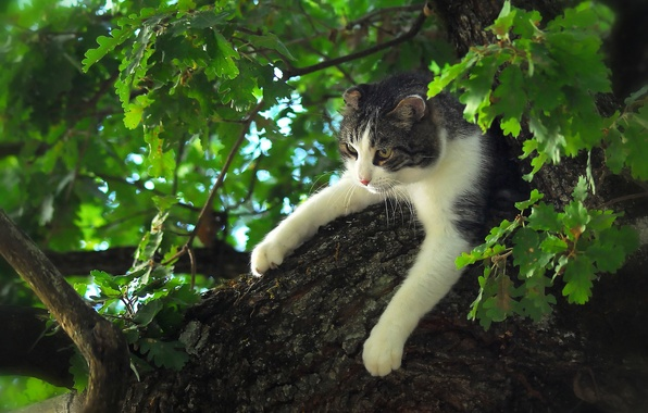 Picture cat, cat, tree, paws, on the tree, oak