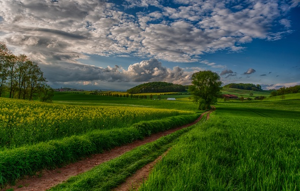 Picture field, the sky, clouds, trees, landscape, sunset, nature, view, road, sky, trees, field, landscape, nature, …