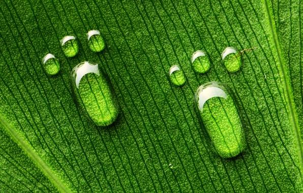 Picture drops, macro, sheet, green, legs, veins