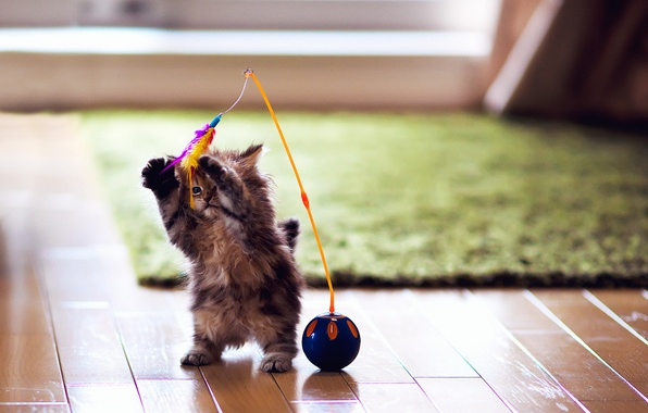Picture cat, kitty, carpet, toy, the game, ball, feathers, flooring, Daisy, Ben Torode