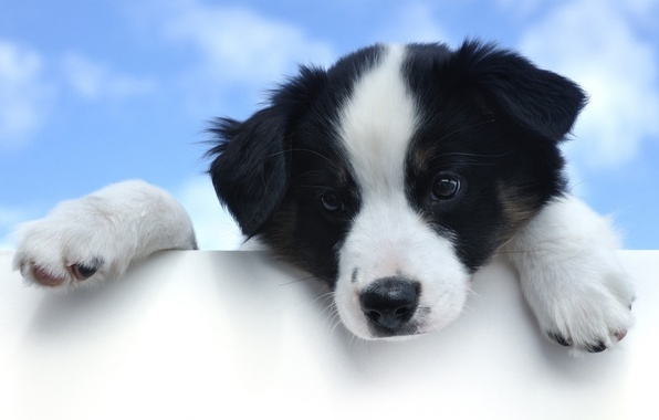 Picture the sky, eyes, look, face, Dog, paws