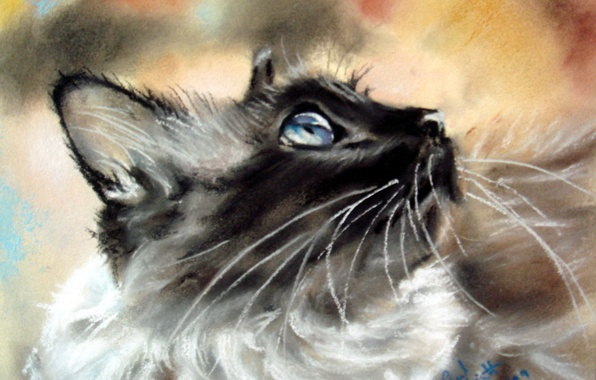 Picture mustache, look, background, animal, muzzle, profile, ears, painting, Siamese cat