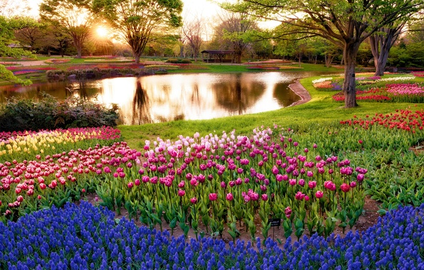 Picture greens, grass, trees, flowers, pond, Park, tulips, gazebo, colorful, the rays of the sun, hyacinths