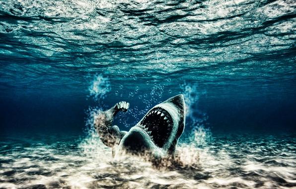 Picture water, shark, Jock, mutant