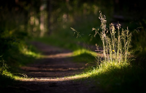 Picture road, grass, macro, light, nature