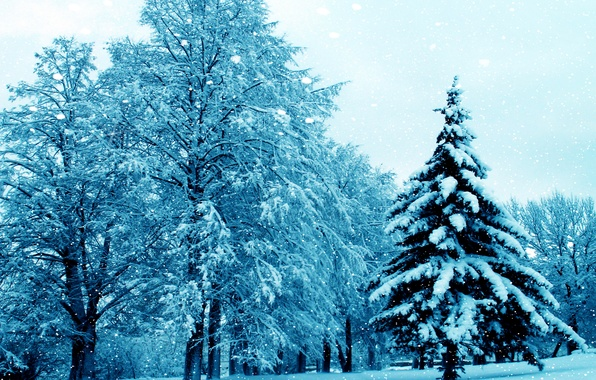 Picture winter, snow, trees, nature, tree, nature, winter, snow, tree
