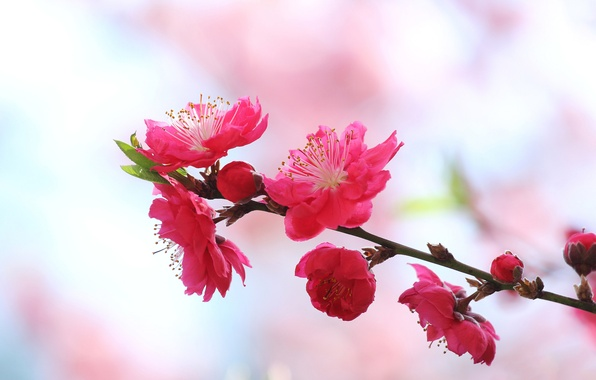 Picture nature, branch, spring, petals, garden