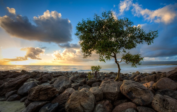 Picture sea, the sky, clouds, sunset, stones, tree