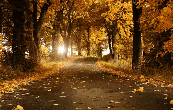 Picture road, autumn, leaves, trees, Sweden