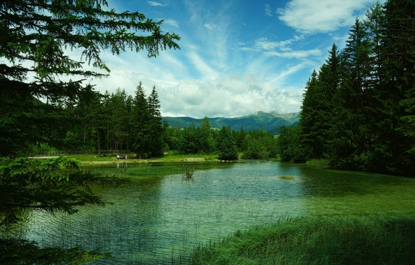 Picture greens, forest, grass, trees, mountains, lake, Italy, Toblach Lake