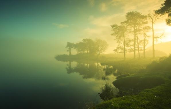 Picture grass, the sun, trees, fog, lake, shore, morning