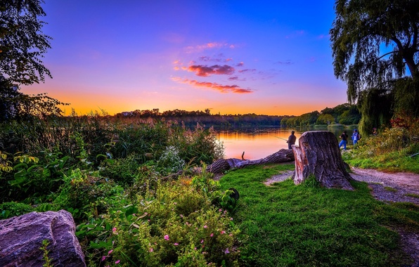 Picture greens, forest, grass, trees, lake, dawn, shore, fishermen, the bushes