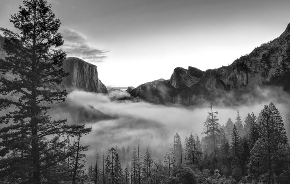Picture forest, mountains, nature, Park, photo, CA, black and white, USA, Yosemite