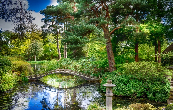 Picture greens, trees, pond, Park, England, the bridge, the bushes, Tatton Hall