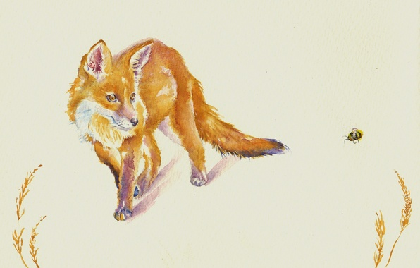 Picture watercolor, Fox, bee, face