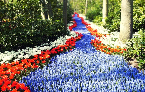 Picture road, greens, forest, the sun, flowers, tulips, Holland, path