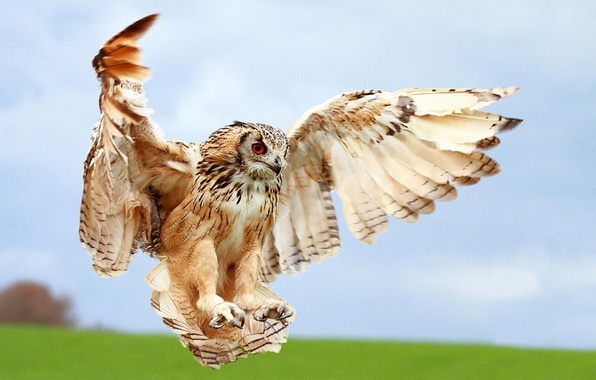 Photo wallpaper blur, macro, landing, wings, bird, owl