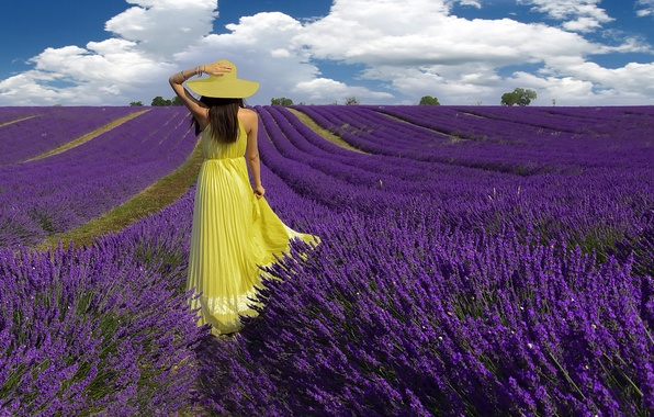 Picture field, summer, girl, lavender