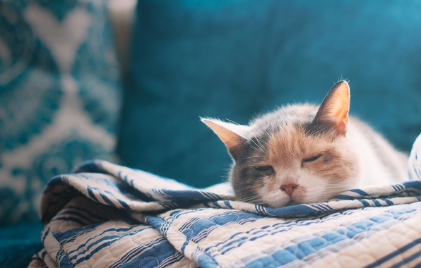 Picture cat, bed, sheet, cat, bed, sleeping, bed sheet, sleeping