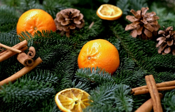 Picture branches, holiday, new year, spruce, fruit, cinnamon, needles, bumps, slices, spices, tangerines