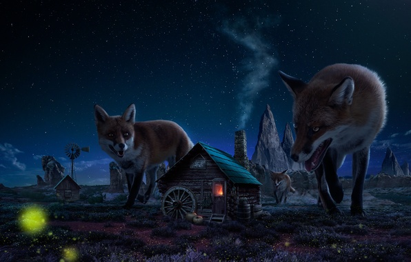 Picture night, house, figure, Fox