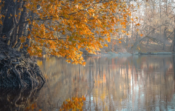 Picture autumn, leaves, trees, fog, river, morning