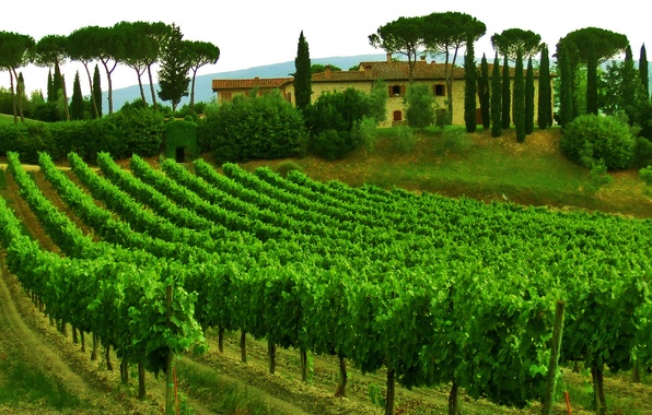Picture the sky, trees, house, Italy, vineyard, Tuscany