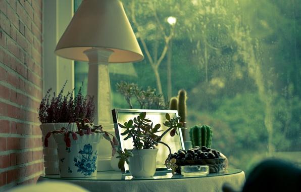 Picture house, Windows, lamp, plants, cactus