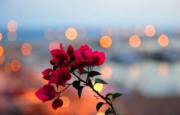 Picture leaves, flowers, lights, branch, petals, Blik