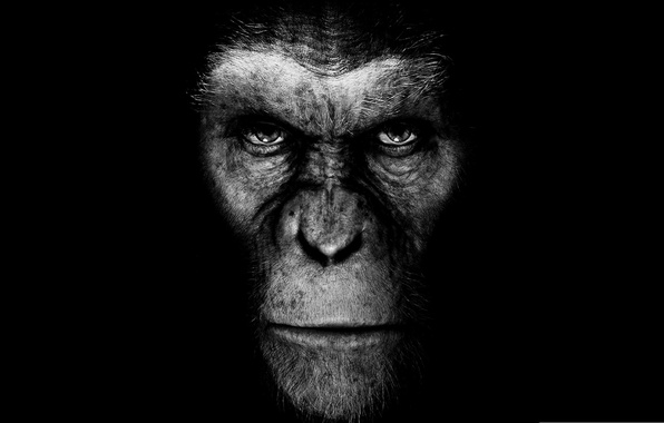 Picture movie, the film, monkey, black background, rise of the planet of the apes, rise of …