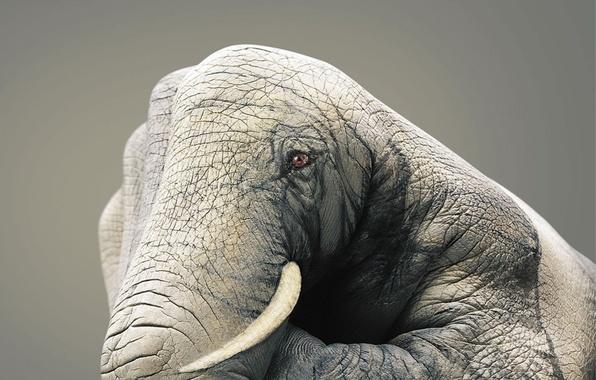 Picture figure, hand, Elephant