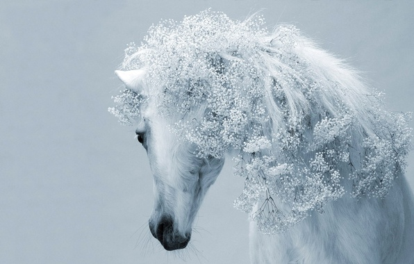 Picture BACKGROUND, HORSE, MANE, WHITE, FLOWERS